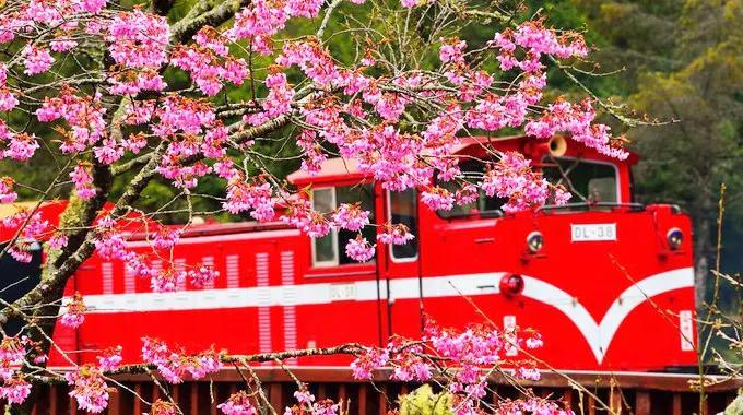 看樱花只知道去日本?海峡两岸都要笑掉大牙!