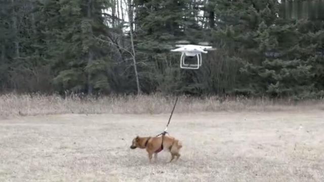 这个人想偷懒,竟然用无人机遛狗,结果怎么会是这样呢?笑喷!