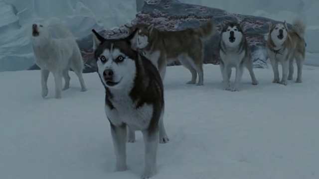 8只狗被主人遗弃南极,独自生存152天,苦苦等待救援