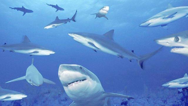 当自己美人鱼了?奇葩男子脱光光 跳入水族馆池子与鲨鱼同游