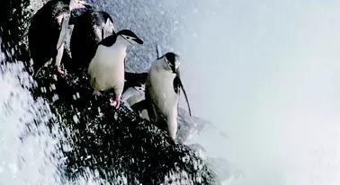 【地球:神奇的一天】树懒企鹅独角鲸特辑