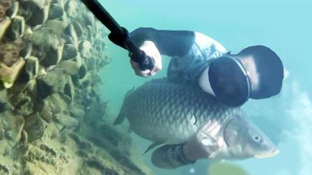 实拍潜水高手水底抓鱼与鱼共舞, 这可比钓鱼刺激多了!