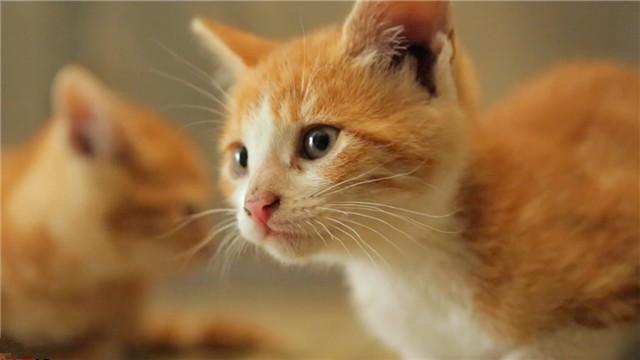 【爱猫之城】发暖心推广曲 俏皮《猫语》述心事