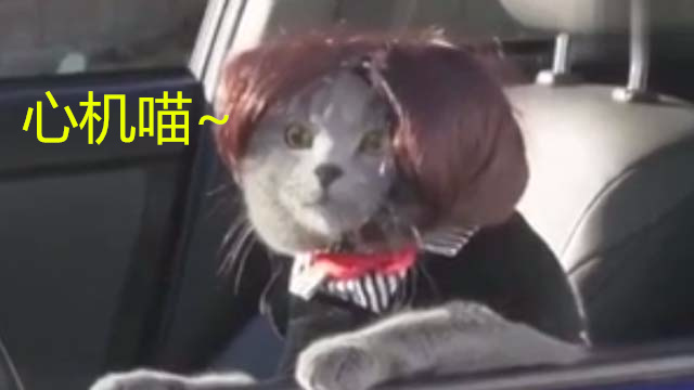 真人版疯狂动物城!心机猫智斗懵逼警察