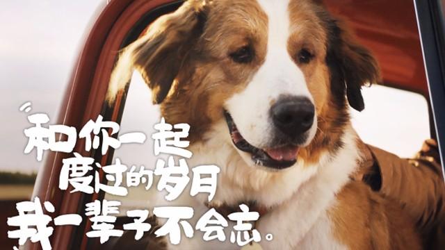 【一条狗的使命2】原来天使就在身边