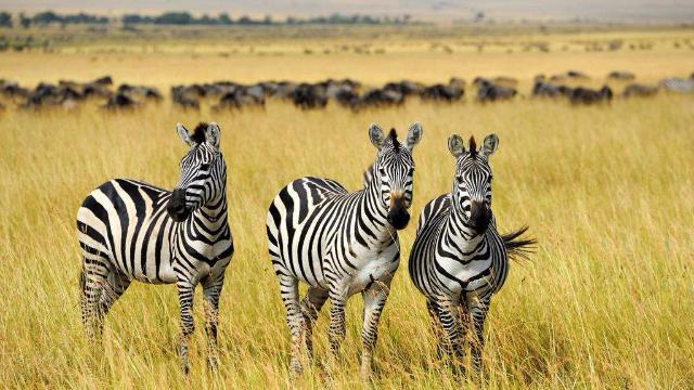 非洲大草原:一秒带你回到童年最爱《动物世界》