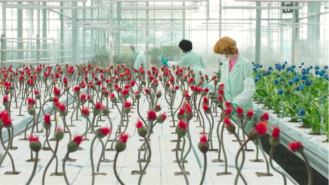 专家培育能让人开心的神秘植物,可一开花,却引发巨大灾难