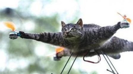 荷兰男子把去世的猫咪做成无人机,飞上天空,太另类了