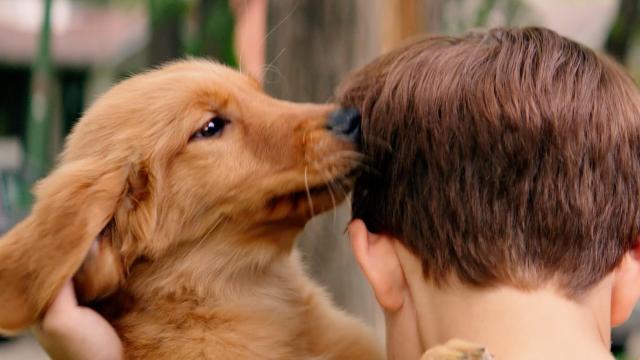 《一条狗的使命》续集来了 原班人马回归