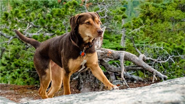 【一条狗的回家路】确认引进曝新预告 贝拉横跨四季为爱归来
