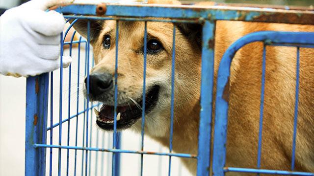 【监狱犬计划】发布病毒视频 暖心路人呼吁拯救流浪犬