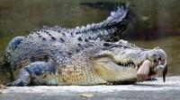 妇女15个孩子被喂鳄鱼