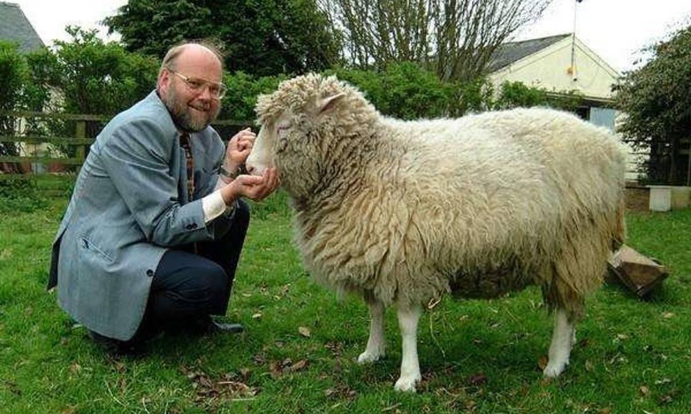 20年前就克隆出羊,那为何不克隆人?看到克隆羊的下场终于懂了!