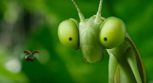 【昆虫总动员2】先导预告