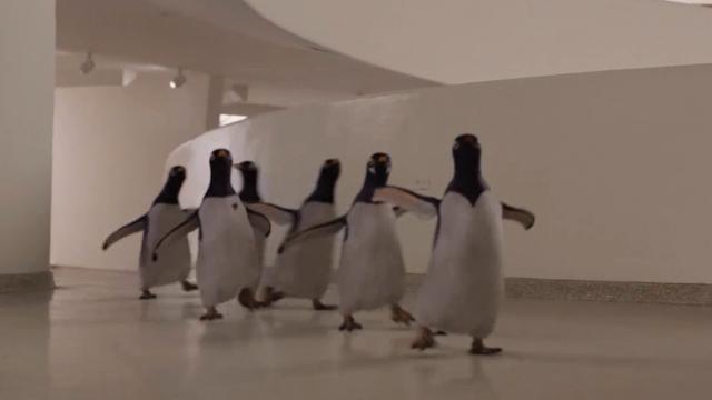 男子家养了6只企鹅,没想到却意外救了自己,走上人生巅峰